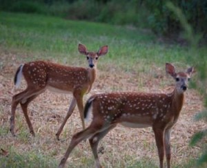 Meigs County Wildlife Photo